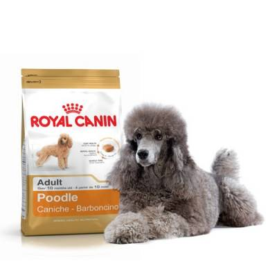 Royal Canin Caniche Adulte