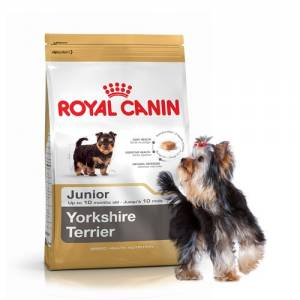 Royal Canin Mini York Junior