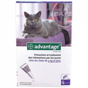 Pipettes Advantage Chats de 4 kg et plus