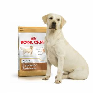 Royal Canin Labrador Retriever Adulte