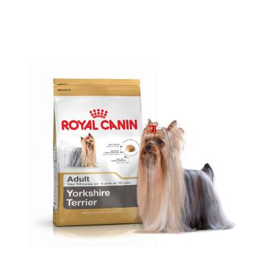 Royal Canin Mini York